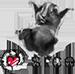 Link na Hrčak srce